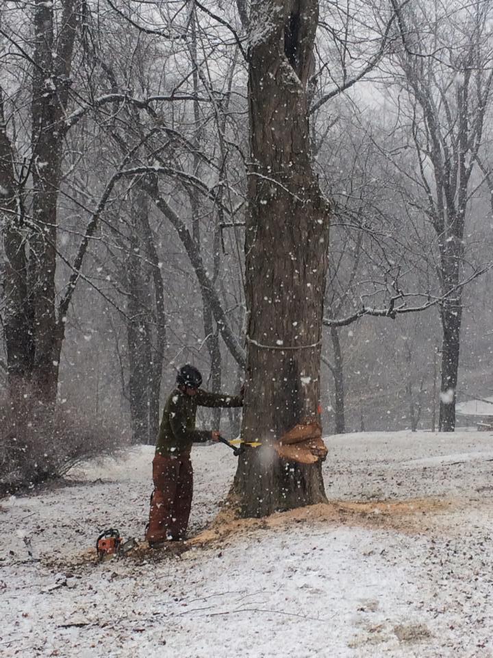 Arborel Tree Service In Hampton